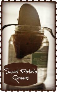 sweet potato greens